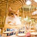 オシャレすぎる猫カフェ モカ(MoCHA)東京に続々オープン、秋葉原・竹下通りにも
