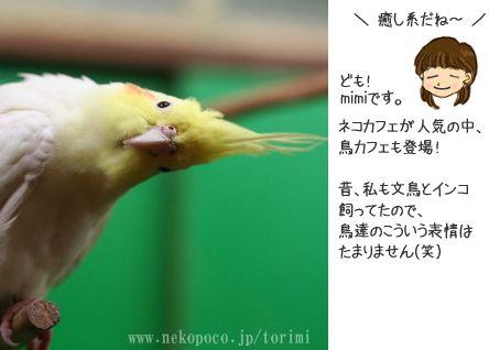 鳥カフェ 鳥に癒される 鳥見カフェ ( とりみカフェ )