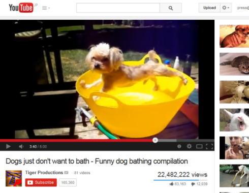 「嫌だと言っているだろ!」お風呂を全力で拒否するワンコ動画