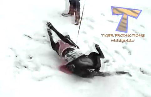 雪が好きすぎてたまらない、犬と猫のハシャギっぷりが可愛い動画