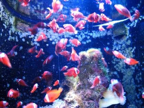 美ら海水族館で綺麗な魚たち