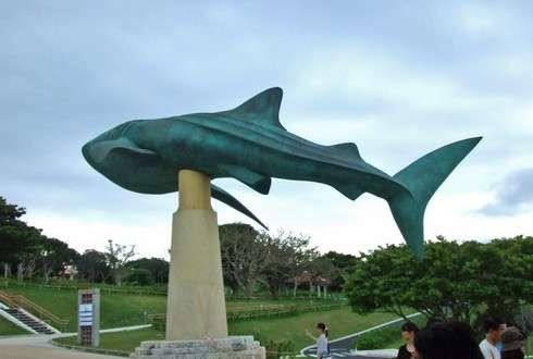 美ら海水族館とジンベイザメ