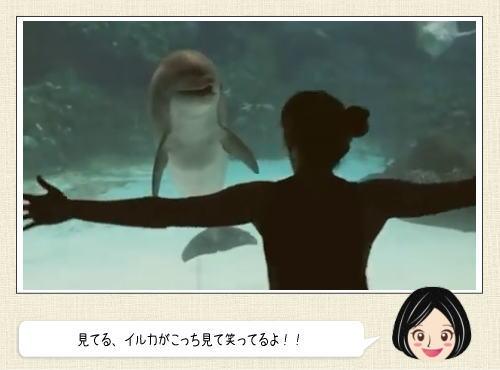 イルカが回転系アクションに大喜び!何かが通じ合った瞬間