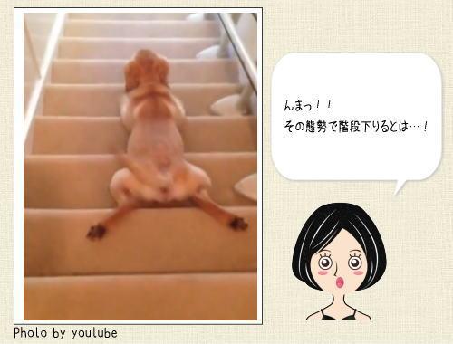 その態勢で!? 犬が階段を下りるブサカワ動画