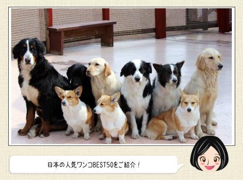 日本の人気犬種ランキング、モフモフのあのワンコが1位