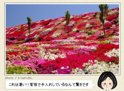 とても個人所有とは思えない規模!長崎県に美しすぎる、つつじ園