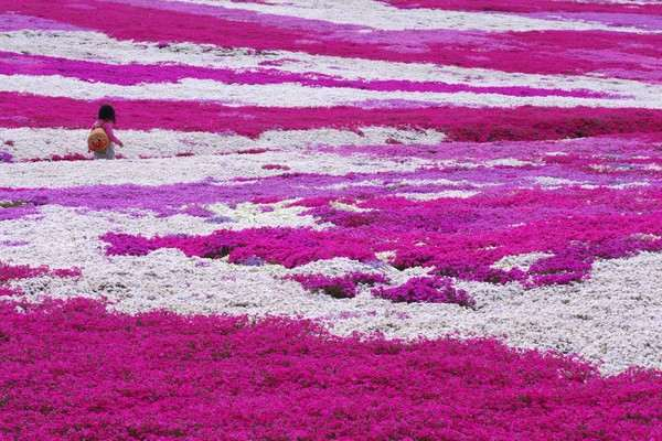 松本ツツジ園、芝桜の絨毯