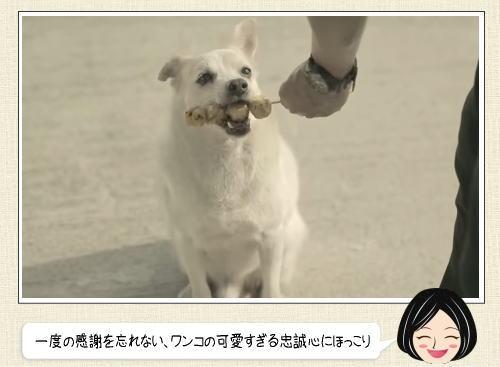 タイ銀行のCM動画が、なんだかほっこり!犬の恩返しが可愛すぎ