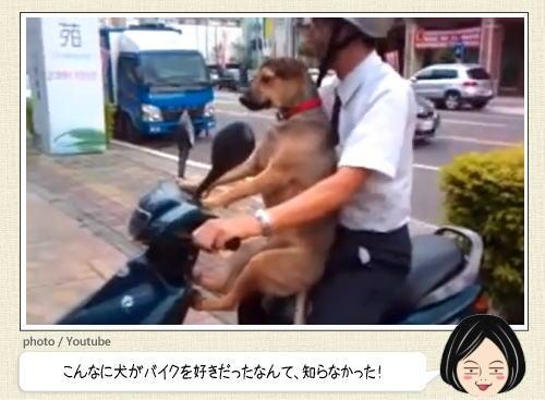 バイク犬のバランスが凄い!自らバイクに乗りこみ風を感じるワンコたち
