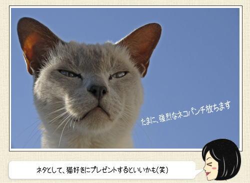 ネコにヤラれた傷を癒す 「にゃんそうこう」、お薬袋がまたカワイイ