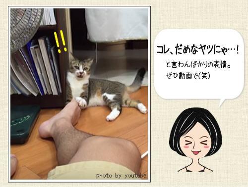 キョーレツーゥ!! ご主人様の足の臭さに痙攣するネコ