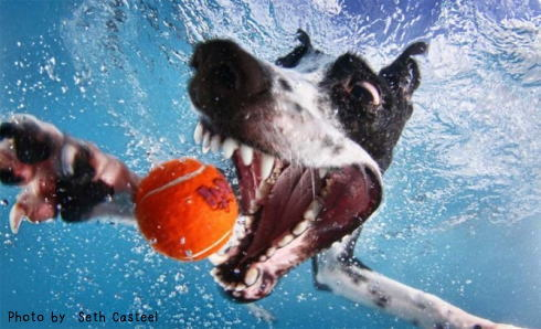 水中 犬の写真1
