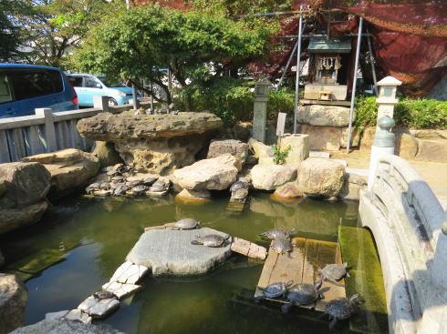下関 亀山八幡宮の「お亀明神」 亀が居る
