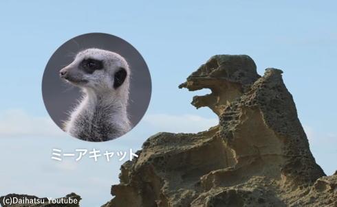 しったげどでしたー!山﨑賢人がミーアキャットに見えたあの岩で叫んだ意味