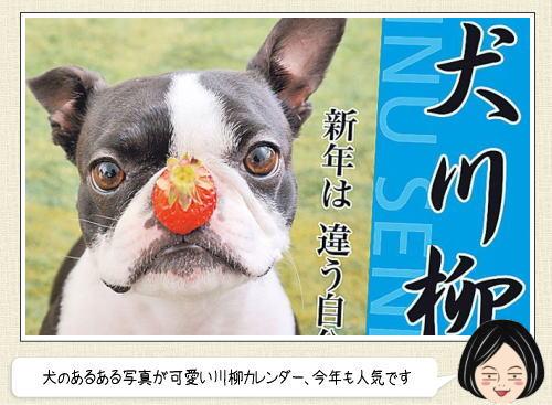 今年も人気、犬川柳カレンダー 2016「ママ悲鳴 昨日シャンプーしたばかり」など