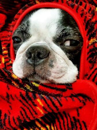 風邪予防にマフラー
