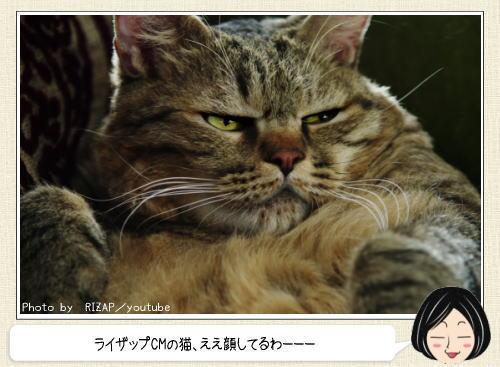 ライザップのデブ猫はネコカフェで会える!お店の看板として活躍中