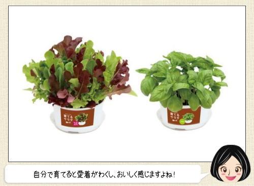 育てるサラダ、ファミマからおうちで手軽に育てられる野菜4種発売