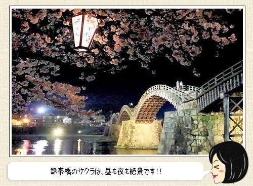 絶景で魅了する山口県・錦帯橋の桜、これぞ日本の春!