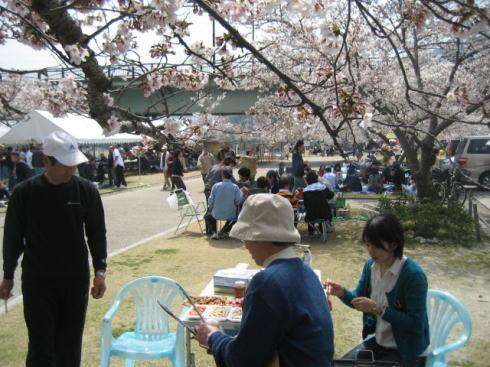 錦帯橋の桜 バーベキューエリアもある