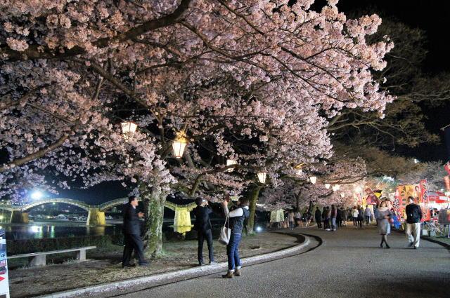 錦帯橋の桜 夜の部9