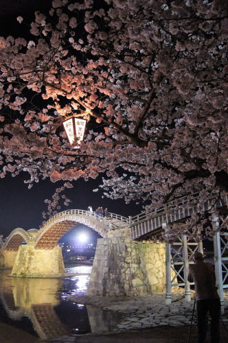 錦帯橋の桜 夜の部8