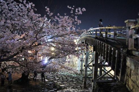 錦帯橋の桜 夜の部2