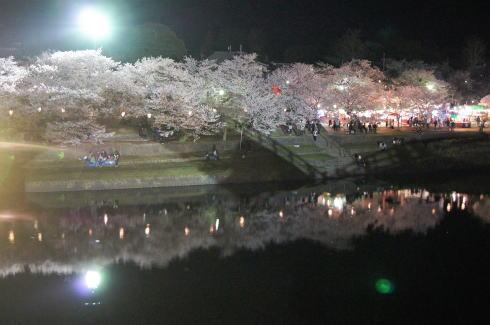 錦帯橋の桜 夜の部4
