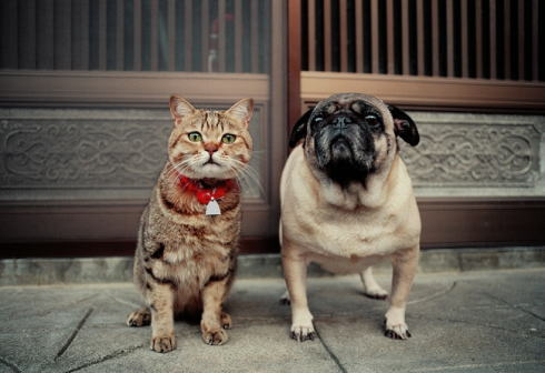 GWは全国ネコ三昧!猫好きにたまらん写真展が15か所で