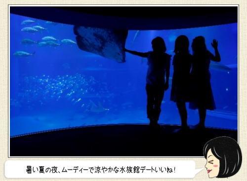 海遊館 おとなナイトツアー、夜の水族館を楽しめる夏休み企画