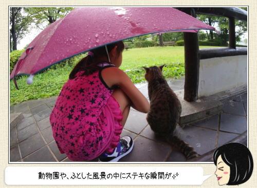 濡れたくないのだ!動物たちの雨宿りがかわいい