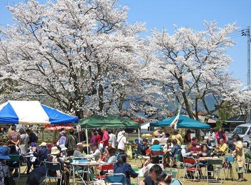 徳佐八幡宮 満開の桜と屋台