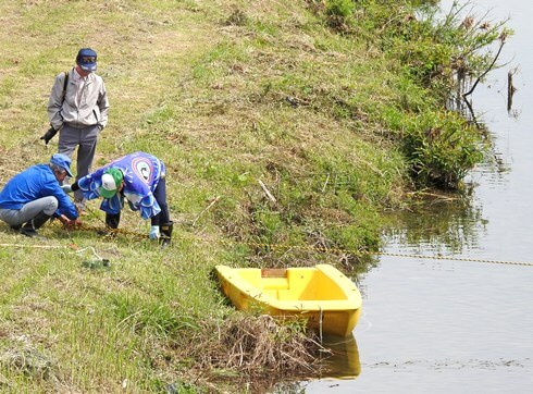水中を泳ぐこいのぼり「鯉のぼりの川流し」山口県