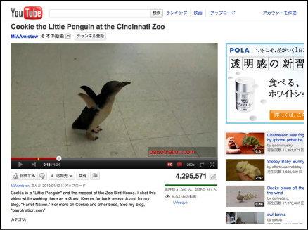 シンシナティ動物園のペンギンが、大ハシャギ