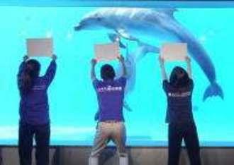 九十九島を99CM動画でPR中、イルカの日本初の大技も公開!