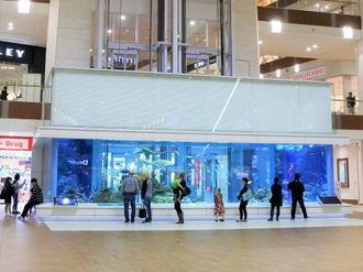 イオンモール沖縄ライカムの水槽、館内にプチ水族館のある風景