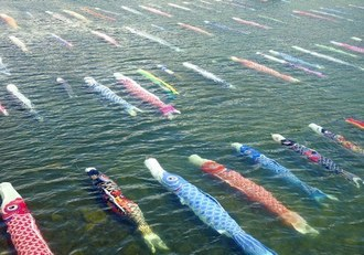 川を泳ぐ鯉のぼりが圧巻!山口県の珍しい「水中鯉のぼり」の風景