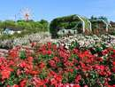 山口最大級のバラ園・蜂ヶ峯総合公園で、色とりどりの薔薇に癒される