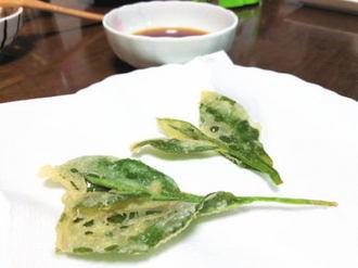 茶葉まるごと食べられる!「茶葉の天ぷら」緑茶を余すとこなく