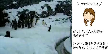 ペンギン 動画