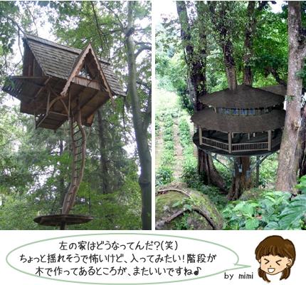 木の上の家1
