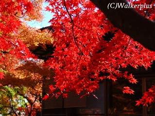 箱根 紅葉