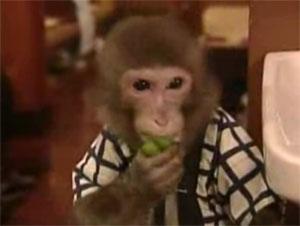 猿 働く 居酒屋
