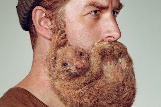髭が動物?!剃刀のシック(Schick) ニュージーランドのポスター フェレット