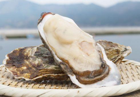 宮城県石巻市で、旨みが最高の「夏の牡蠣」 出荷中!