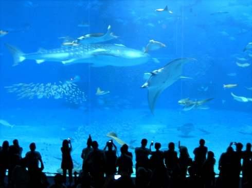 美ら海水族館の巨大水槽