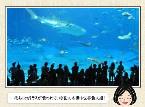 美ら海水族館、食事しながら眺められる巨大水槽!沖縄 癒しの水族館