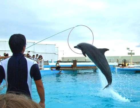美ら海水族館、イルカショー
