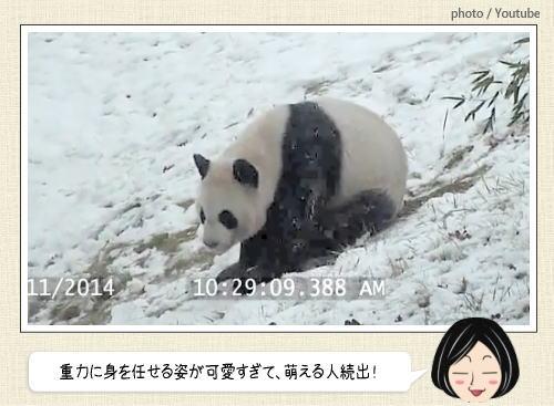 か、かわえぇぇ…!パンダが雪で大はしゃぎ、重力に身を任せる姿が癒し系すぎると話題