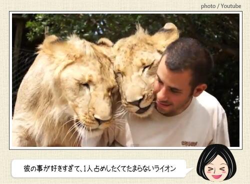 人間に恋するライオン、男性への愛情が止まらない